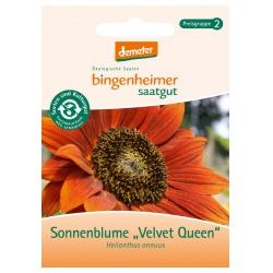 Sonnenblumen Velvet Queen