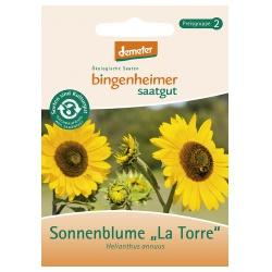 Sonnenblume La Torre